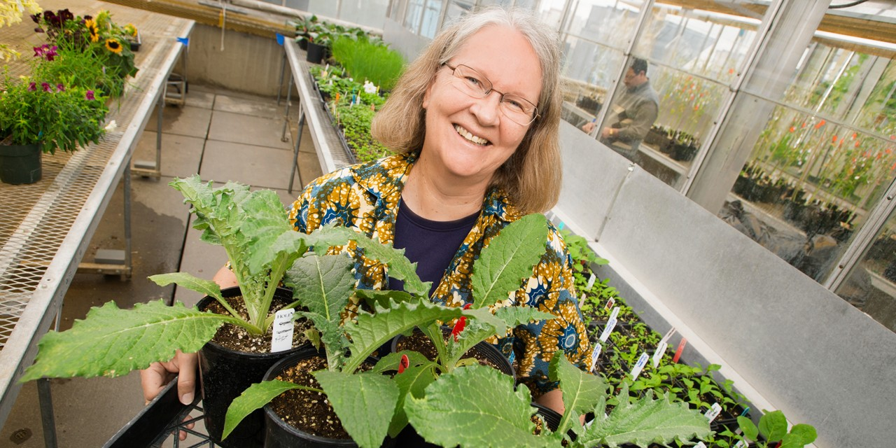 Since its beginnings in 2009, the Green & Gold Garden has been grown and harvested by a community of volunteers, including Shirley Ross, a retired U of A crop scientist and one of three 2017 UAlberta Community Connections Award winners.