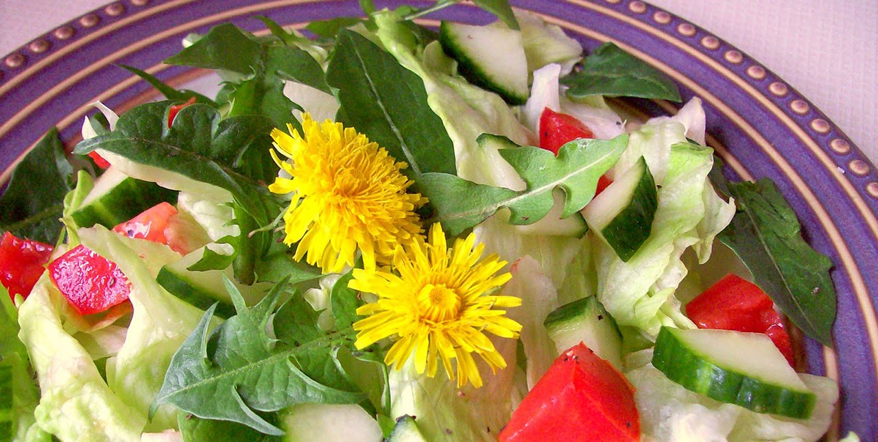 The dandelion is one of many wild plants that are edible and can be part of your summer diet.