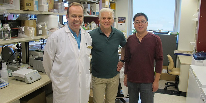 UAlberta medical researcher Tom Hobman, centre, along with his colleague Chris Power, left, and postdoctoral fellow Zaikun Xu, discovered that peroxisomal proteins are virtually absent in patients with HIV-associated neurocognitive disorders (HAND). The team believes the discovery could lead to new biomarkers to rapidly diagnose HAND.