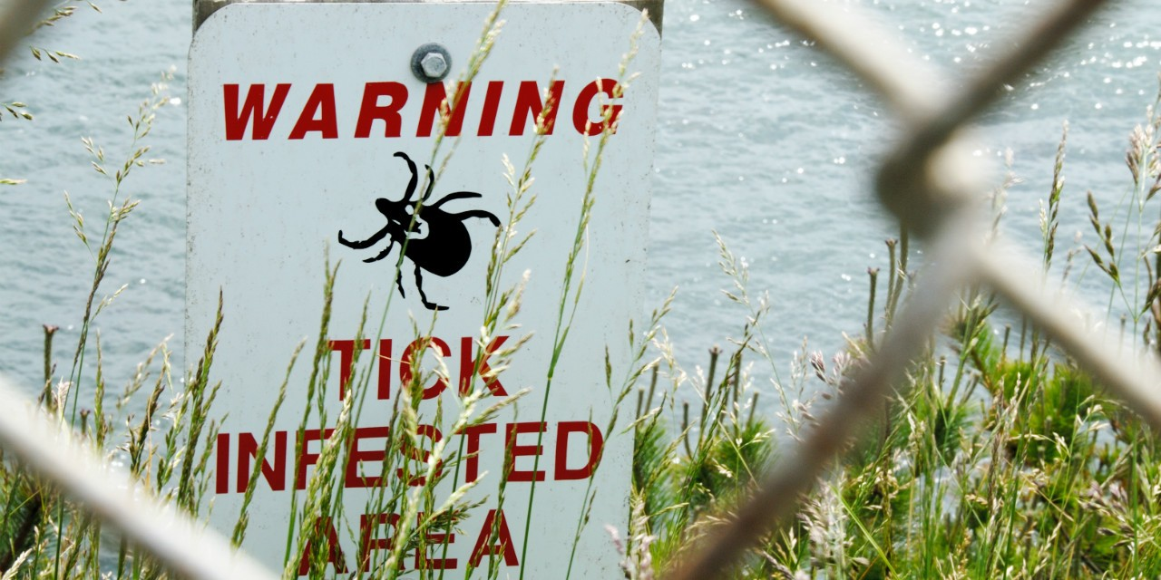 Lyme disease is being overdiagnosed in labs and overexposed in the media, argue two UAlberta medical professors.