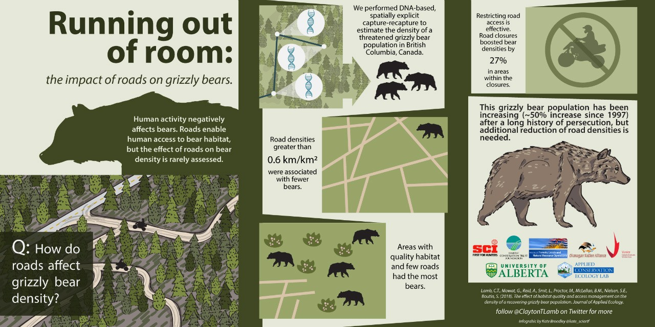 The study showed that higher road density was linked with less grizzly bear density in British Columbia—and that closing roads immediately benefited the threatened bears.