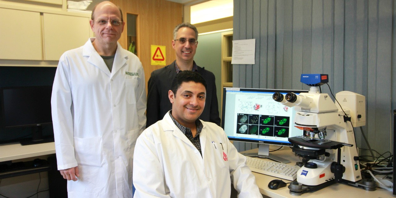 Mohammad Ali (seated), Michael Hendzel (left) and Leo Spyracopoulos discovered that a protein called RYBP prevents cancer cells from repairing themselves, which could make anti-cancer therapies more effective. (Photo: Melissa Fabrizio)