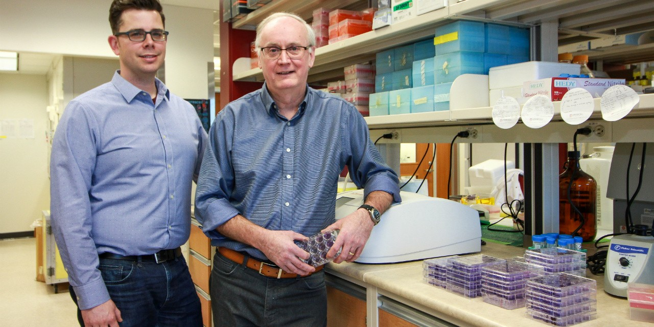 Virologist David Evans (right) and researcher associate Ryan Noyce synthesized a horsepox virus using a published genome sequence. The synthetic virus  could potentially be used to create a new vaccine against smallpox in humans. (Photo: Melissa Fabrizio)