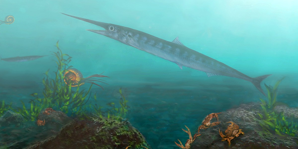 The newly discovered species, called Candelarhynchus padillai, inhabited the waters of what is now Colombia about 90 million years ago. (Image: Oksana Vernygora)