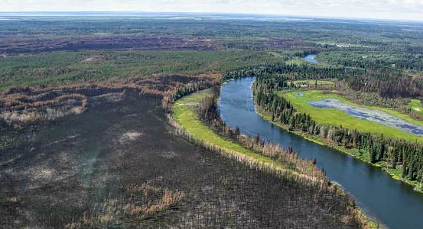 This forest stand near Jackfish River in Wood Buffalo National Park was decimated after a wildfire. A new UAlberta study predicts that about half of Alberta's upland boreal forest will disappear as a result of climate change and increasing wildfires over the next century. (Photo: Natural Resources Canada)