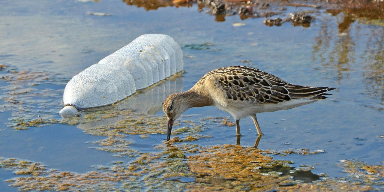 Plastic is cheap and convenient, but it's creating a growing pollution problem worldwide. Here are some tips to help you cut back on the plastic in your everyday life.
