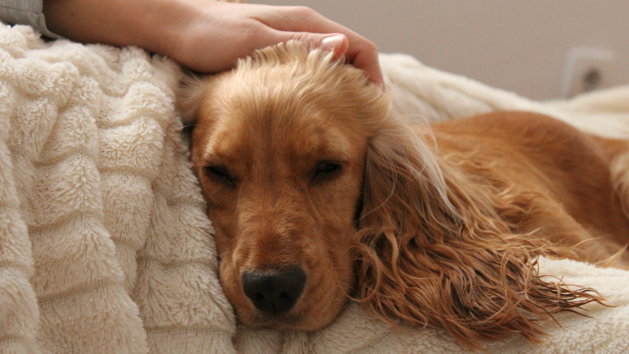 Bringing the dog into the bedroom can help people living with chronic pain sleep better and can ease feelings of anxiety and loneliness, a new study shows. (Photo: Getty Images)