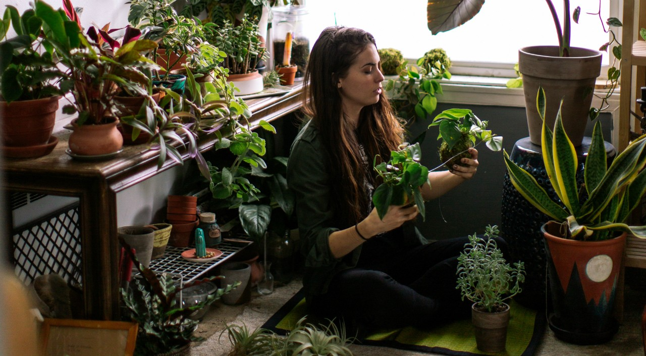 Houseplants filter indoor air and can lift your mood during long winters, so they're worth rescuing from common pests and diseases, says a U of A horticulturalist. (Photo: Getty Images)