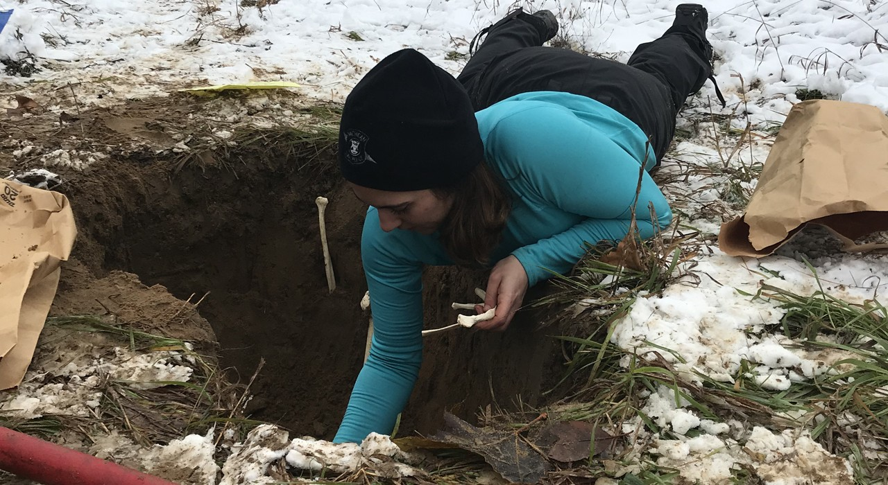 Hanna Friedlander prepares a shallow grave with plastic bones for a training scenario for crime scene investigators. Before her career in the missing persons unit of the Michigan State Police, Friedlander learned the field of forensics as a master's student at the U of A. (Photo: Supplied)