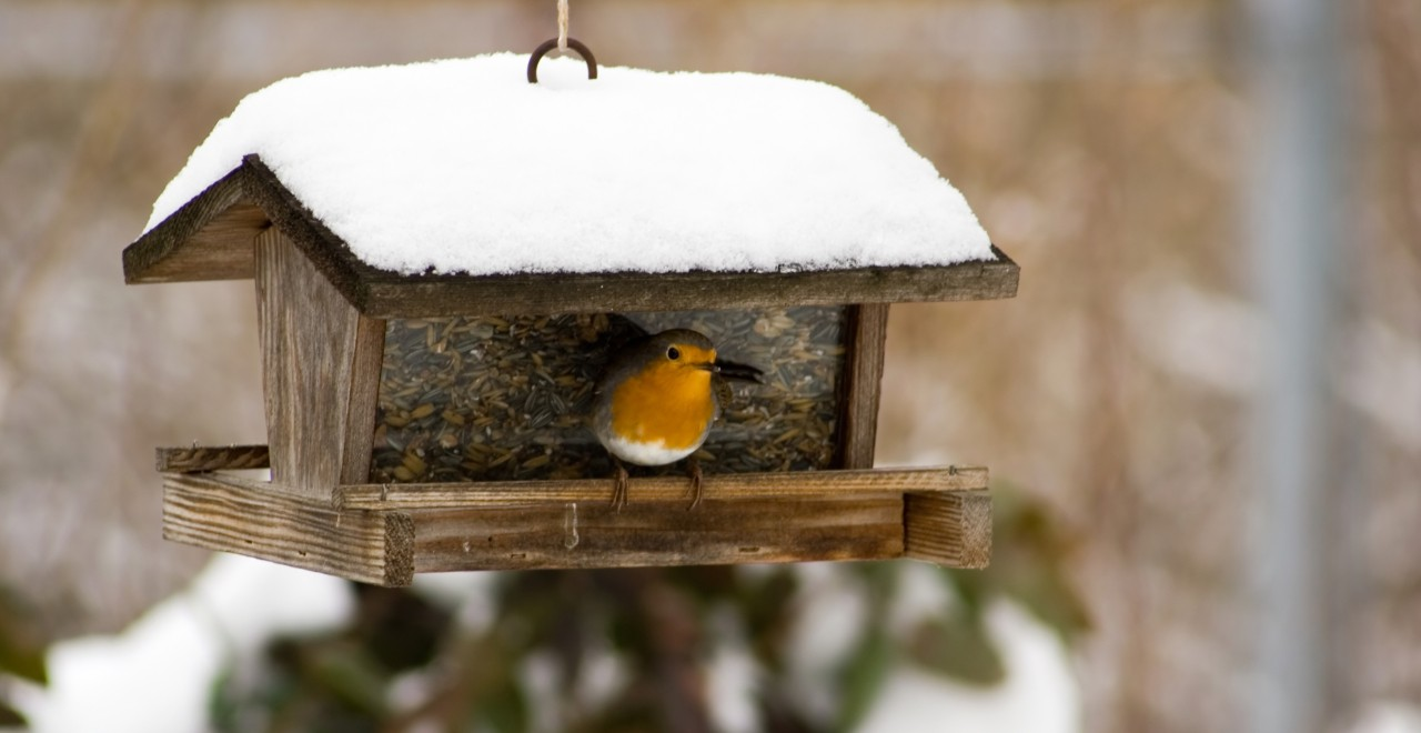 Bird feeders provide a winter food source for wild birds, but they also put birds at risk of collisions with houses and attacks by domestic cats, says a U of A ecologist. (Photo: Getty Images)