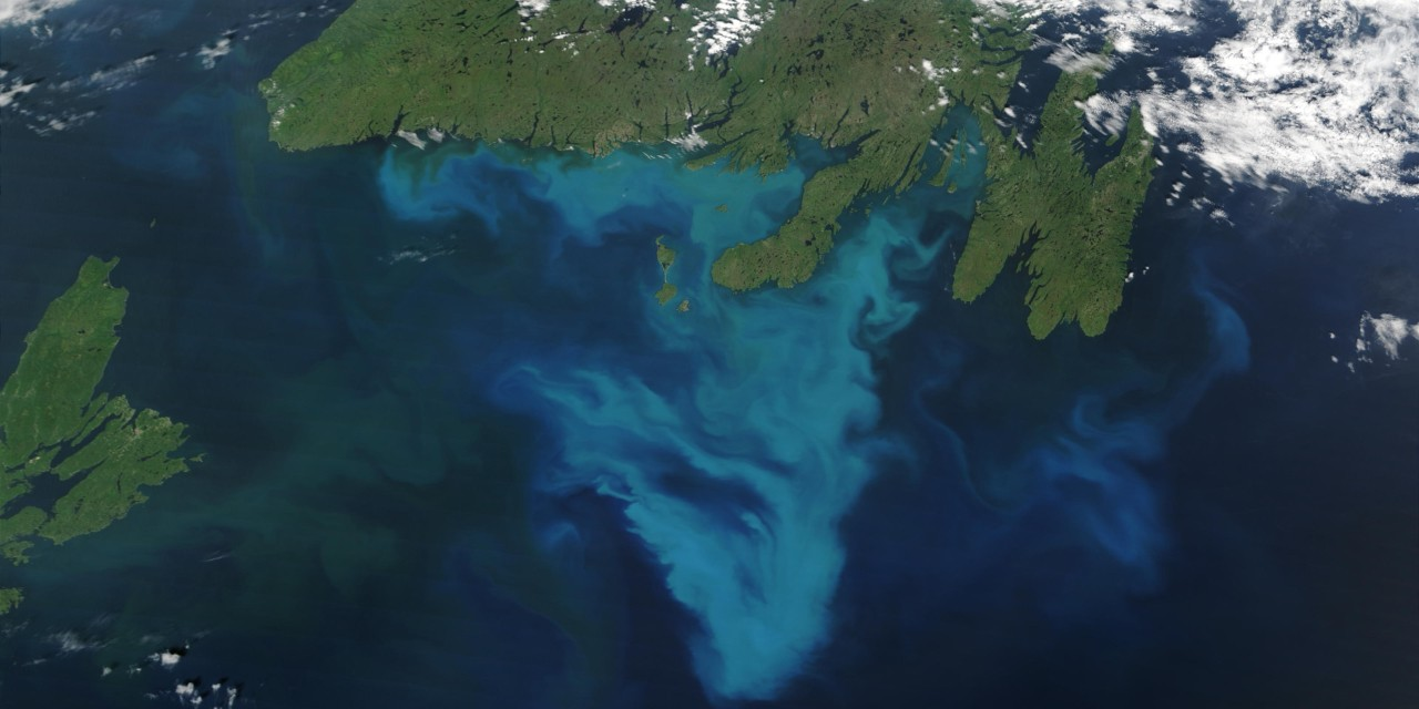 A bloom of algae called Emiliania huxleyi is visible from space off the coast of Newfoundland. U of A researchers found the first evidence that bacteria can cause the single-celled algae to kill themselves—a discovery that holds promise for developing newer, more precise antibiotics and producing biofuels. (Photo: Jacques Descloitres, MODIS Rapid Response Team, NASA/GSFC)