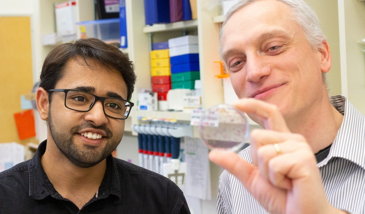 Oncology researcher Armin Gamper (right) and PhD student Amirali Bukhari examine a sample of cancer cells. Their new study showed an experimental therapy combining two drugs dramatically shrank tumours in mice and prevented cancer cells from metastasizing. (Photo: Jordan Carson)
