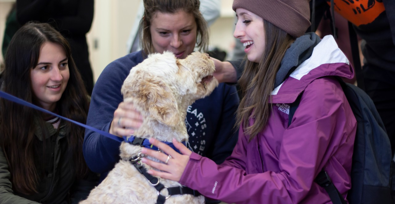 U of A students enjoy some pet therapy with Cappuccino the labradoodle in the Herbert T. Coutts Library. (Photo: Laura Sou, courtesy of CAAWLS)