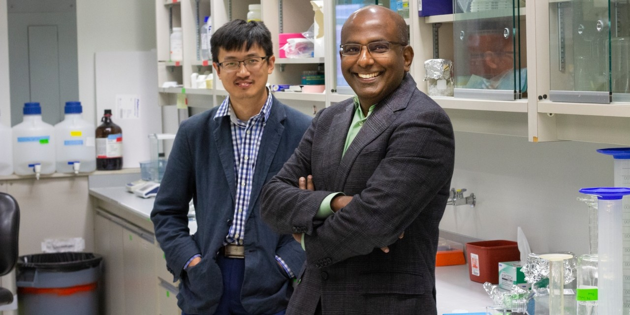 Cardiologist Gavin Oudit (right) and research assistant Wang Wang in the lab. Oudit's team is developing a new treatment that could eventually help protect people from cardiovascular disease, particularly abdominal aortic aneurysms. (Photo: Jordan Carson)