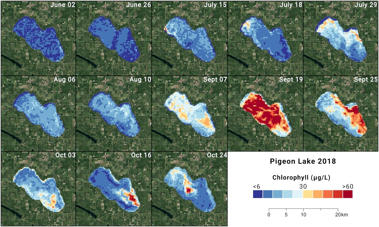 Blue-green algae growth in Alberta's Pigeon Lake last year was well underway by mid-July and peaked in September. We could still see a rebound in algae blooms this year if the late summer and fall are warm, dry, and calm, according to U of A biologist Rolf Vinebrooke. (Images courtesy of Evan DeLancey)