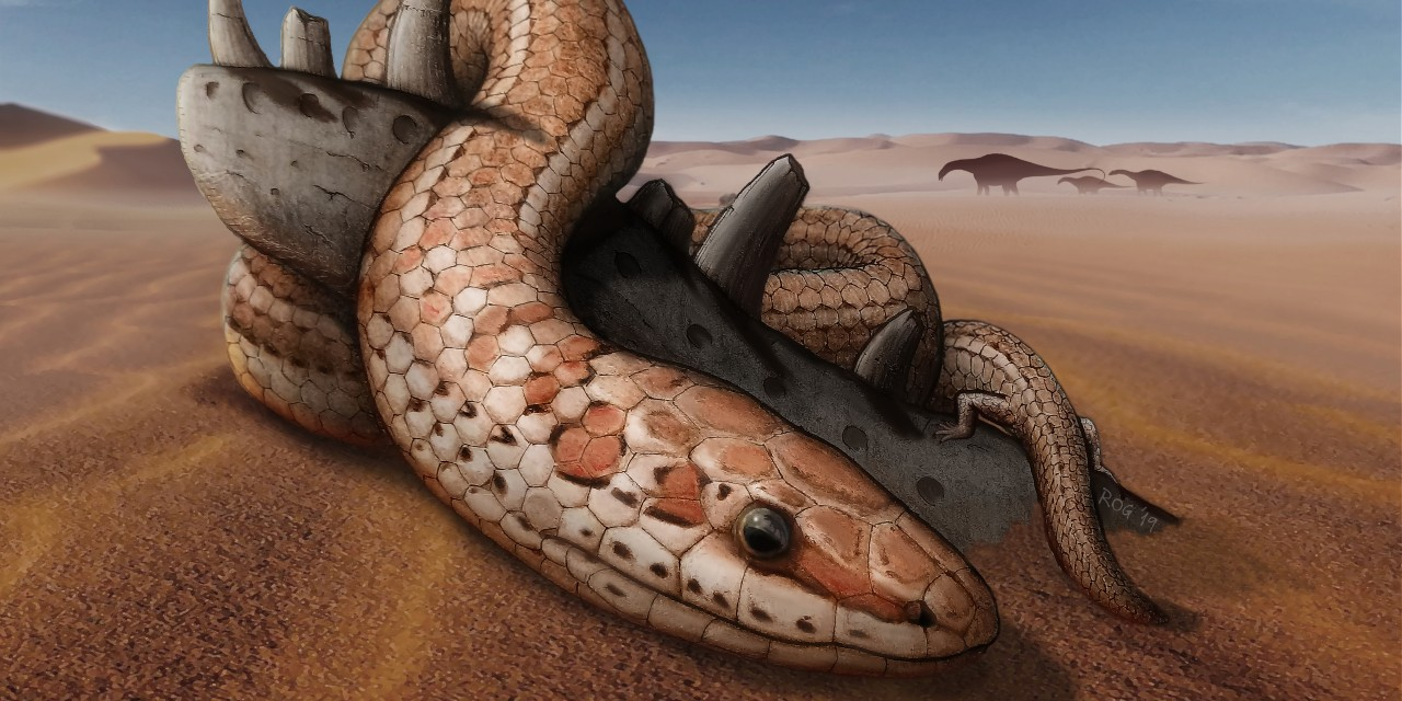Artist's rendition of Najash, a snake with hind legs that lived 95 million years ago in what is now Argentina. A well-preserved fossil of the snake is helping paleontologists understand how its modern descendants evolved. (Illustration: Raúl Gómez)