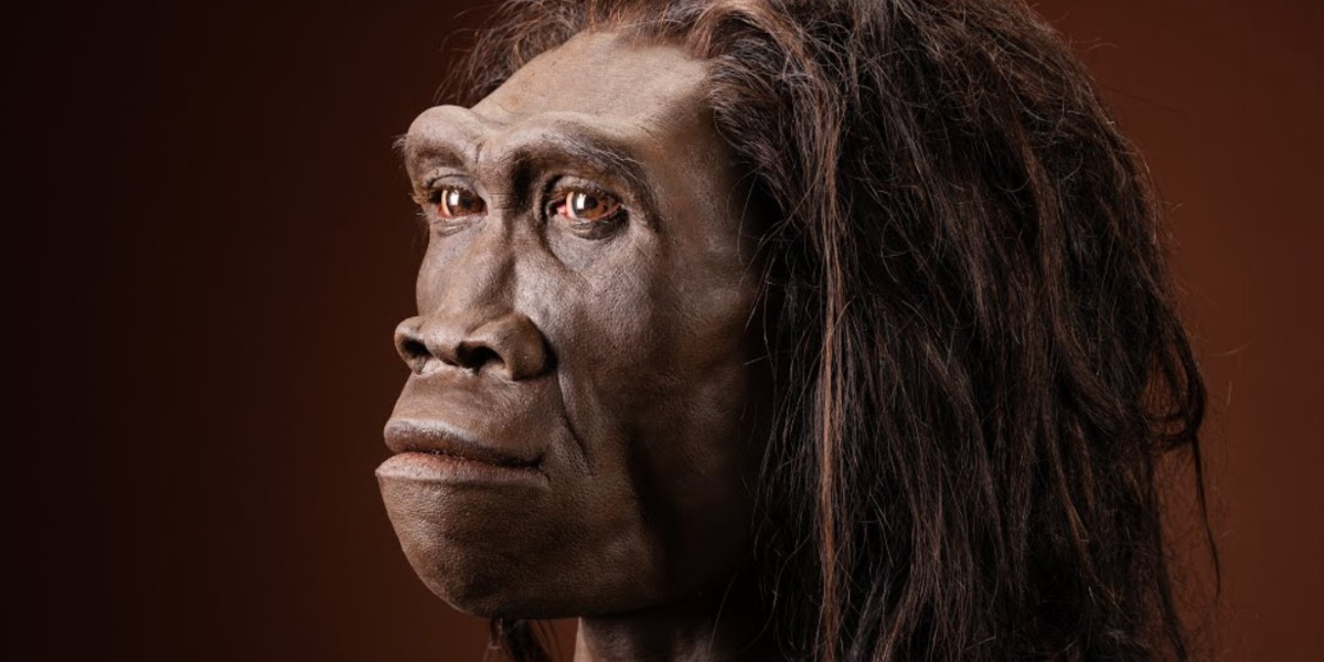 New study identifies last known occurrence of extinct human ancestor