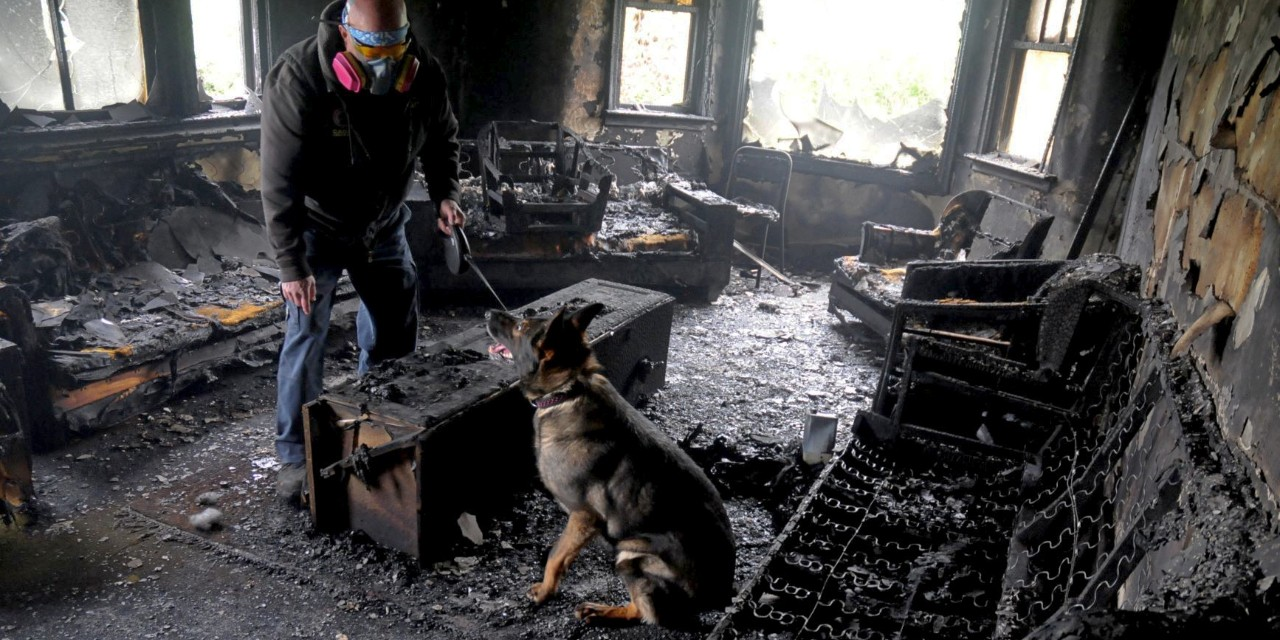 Eza the fire dog and handler Jeff Lunder search a fire scene for traces of accelerants like gasoline that might indicate arson. Understanding the limits of trained dogs' ability to smell tiny traces of gasoline could help scientists improve lab tests, say U of A researchers. (Photo: Joe Towers)