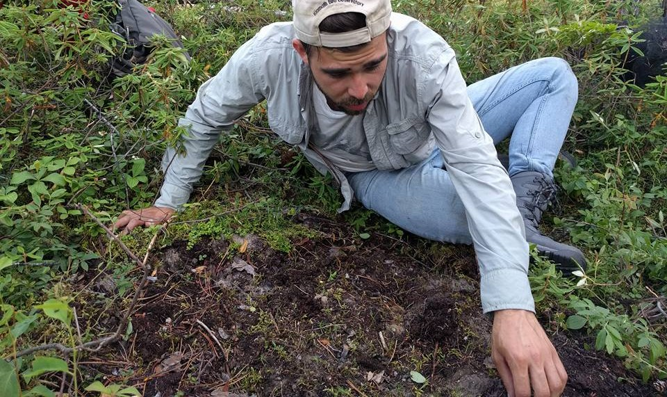 PhD candidate Jean Rodriguez Ramos conducts field research on fungi in the soil of a lodgepole pine forest. Ramos found that disturbances such as drought, wildfires and logging alter the balance of fungi in the forest soil, with implications for forest management. (Photo: Supplied)