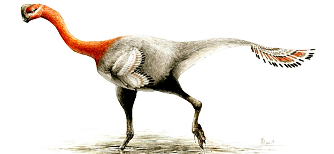 Apatoraptor pennatus as illustrated by paleontology graduate student and paleoartist Sydney Mohr.