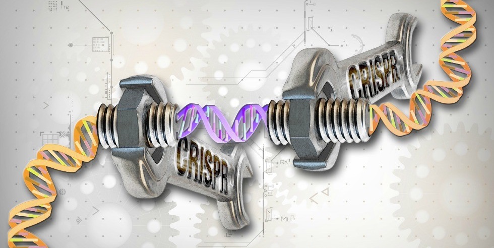 "Artist's representation of the Crispr gene editing technique, which gives researchers unprecedented precision in ""cutting and pasting"" DNA sequences. (Illustration: Ernesto del Aguila III, NHGRI)"