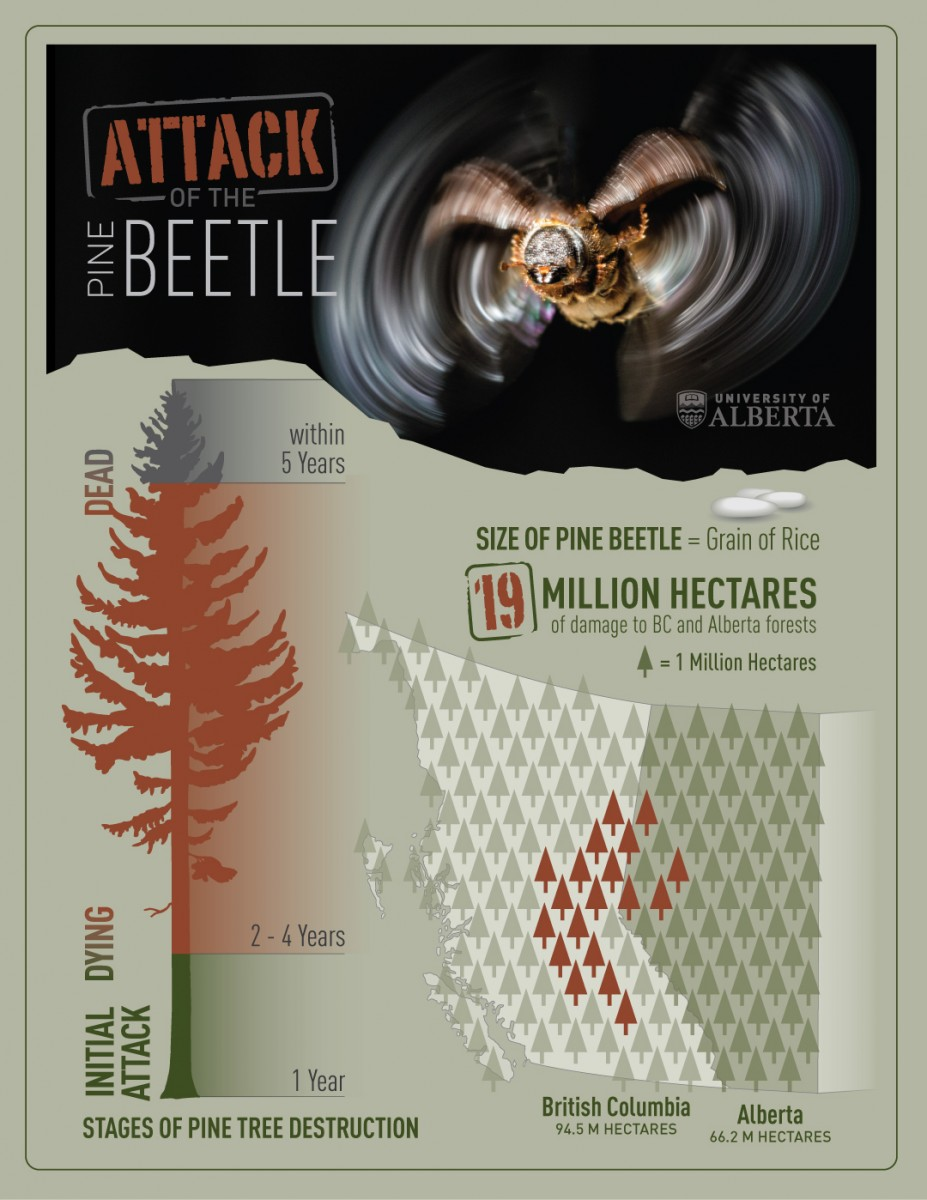 Attack of the Pine Beetle