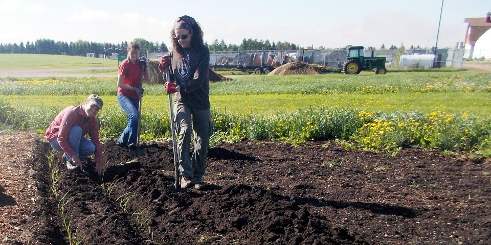 (From left) PhD student Michael Granzow, volunteer Chloe Prosser and researcher Debra Davidson work on the Prairie Urban Garden on UAlberta's South Campus.