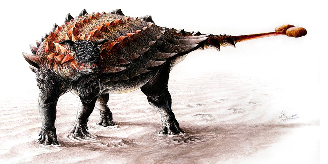 Ziapelta, an ankylosaur with a fully developed tail club. (Illustration: Sydney Mohr)