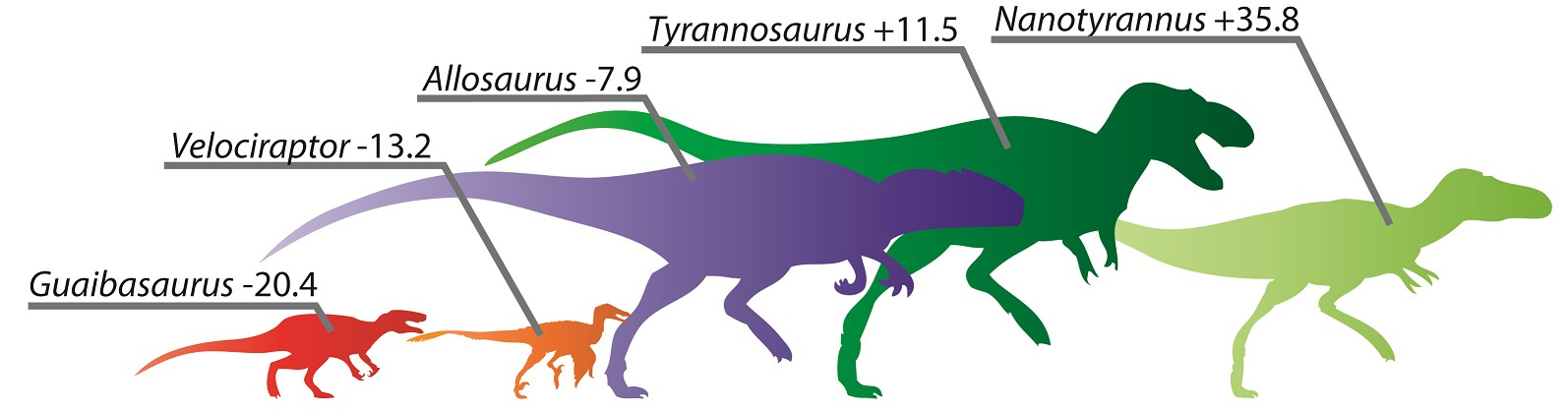 Calculated speed adaptation scores for various dinosaurs. (From left) Guaibasaurus was an early dinosaur with a low score typical of primitive forms; despite its pop culture status, Velociraptor is revealed to be among the least swift of the carnivorous dinosaurs; the Jurassic predator Allosaurus was large and moderately adapted for speed; despite its bulk, Tyrannosaurus scores high on the speed charts; the controversial species Nanotyrannus was the bipedal dino best adapted for speed—the Usain Bolt of its era.