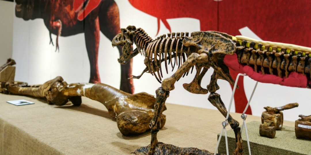 The Discovering Dinosaurs exhibition features more than 250 specimens, most of which have never been shown publicly.