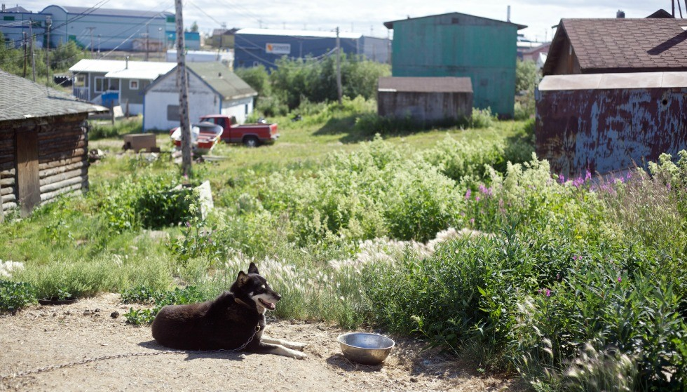 U of A medical researchers work with local groups in Fort McPherson, N.W.T. (pictured above), and three other northern communities to respond to local concerns related to H. pylori infection. (Photo: Christopher Cotrell, under Creative Commons Licence)
