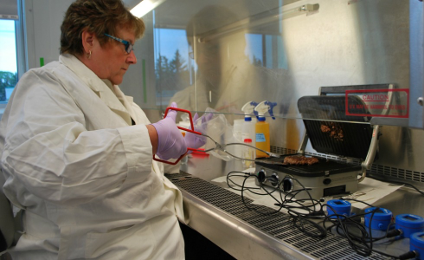 Cooking up surprising results: Food microbiologist Lynn McMullen grills a burger in the lab.
