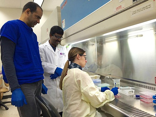 (From left) Daniel Limonta and Anil Kumar supervise as Valeria Mancinelli infects cells with Zika virus in a biocontainment hood.