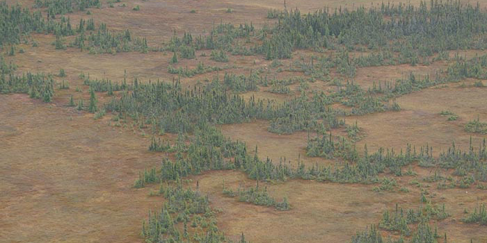 Researcher William Shotyk found virtually no atmospheric lead contamination today in peatlands near the Athabasca Bituminous Sands.