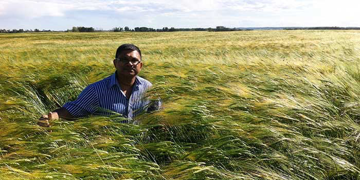 Thava Vasanthan, a grain science and technology researcher, has commercialized a more cost-efficient way of extracting beta glucan from barley grains.