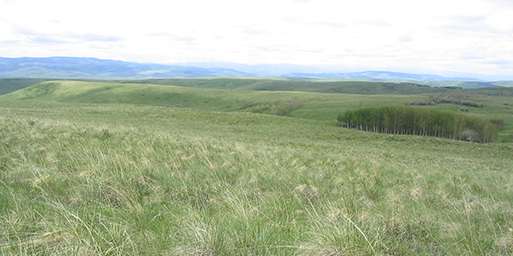 The Onefour Research Ranch is located in the southeastern corner of the province and Stavely Research Ranch is southwest of Nanton.