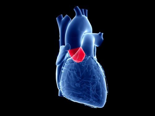 Study: Catheter-Based Valve Replacement Helps More Heart Patients