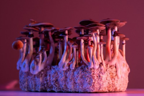 Expert Q&A: Psychedelic Drugs and Mental Health