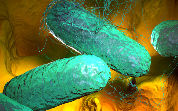 A microscopic view of typhoid fever bacteria. Photo by Getty.
