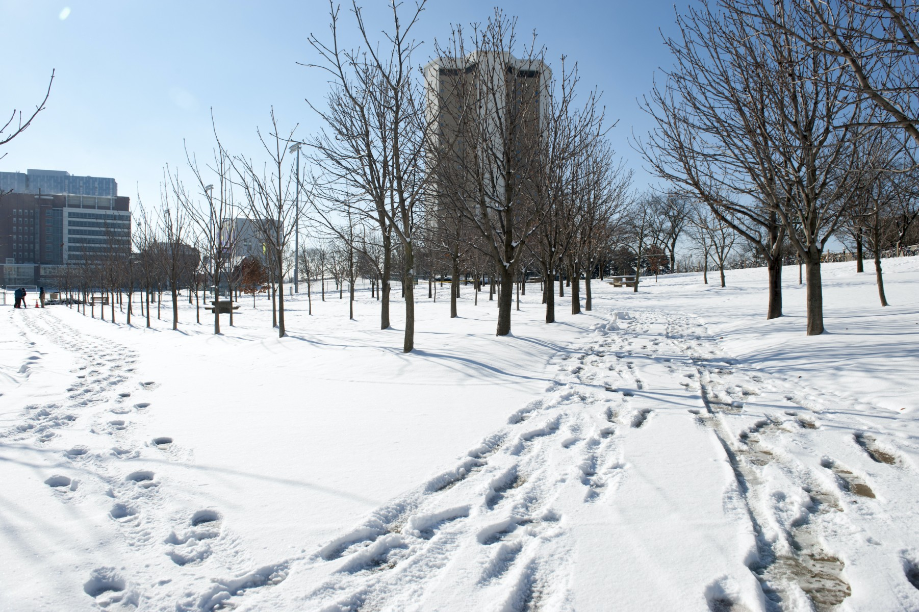 Winter on the Columbus campus