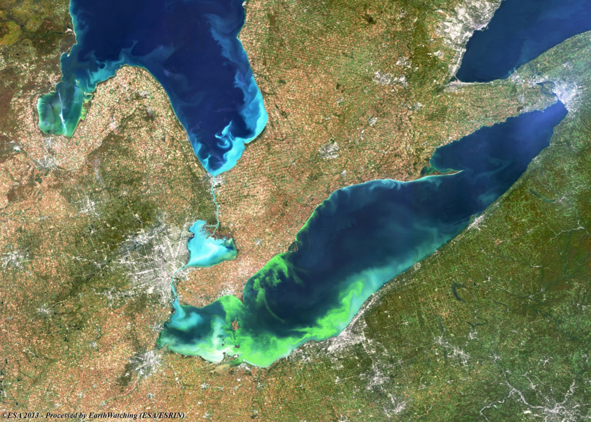 A Lake Erie algal bloom captured by MERIS (MEdium Resolution Imaging Spectrometer) in Oct. 2011. Credit: European Space Agency