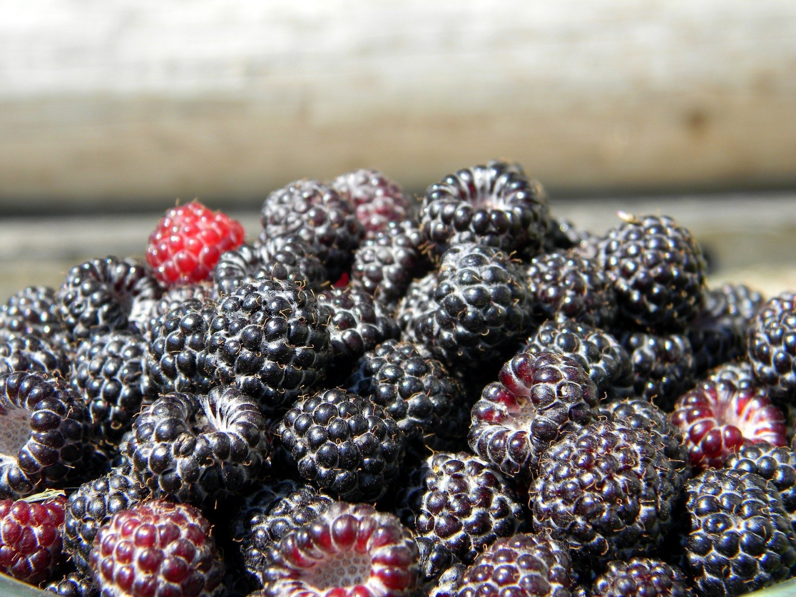 A new study shows eating black raspberries reduces skin inflammation associated with allergies in mice.