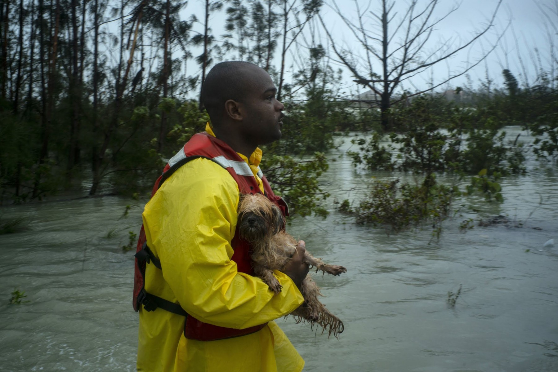 A volunteer looks for the owner of a dog he rescued from the rising waters of Hurricane Dorian, on a flooded road near the Causarina bridge in Freeport, Grand Bahama, Bahamas, Tuesday, Sept. 3, 2019. The storm's punishing winds and muddy brown floodwaters devastated thousands of homes, crippled hospitals and trapped people in attics. (AP Photo/Ramon Espinosa)