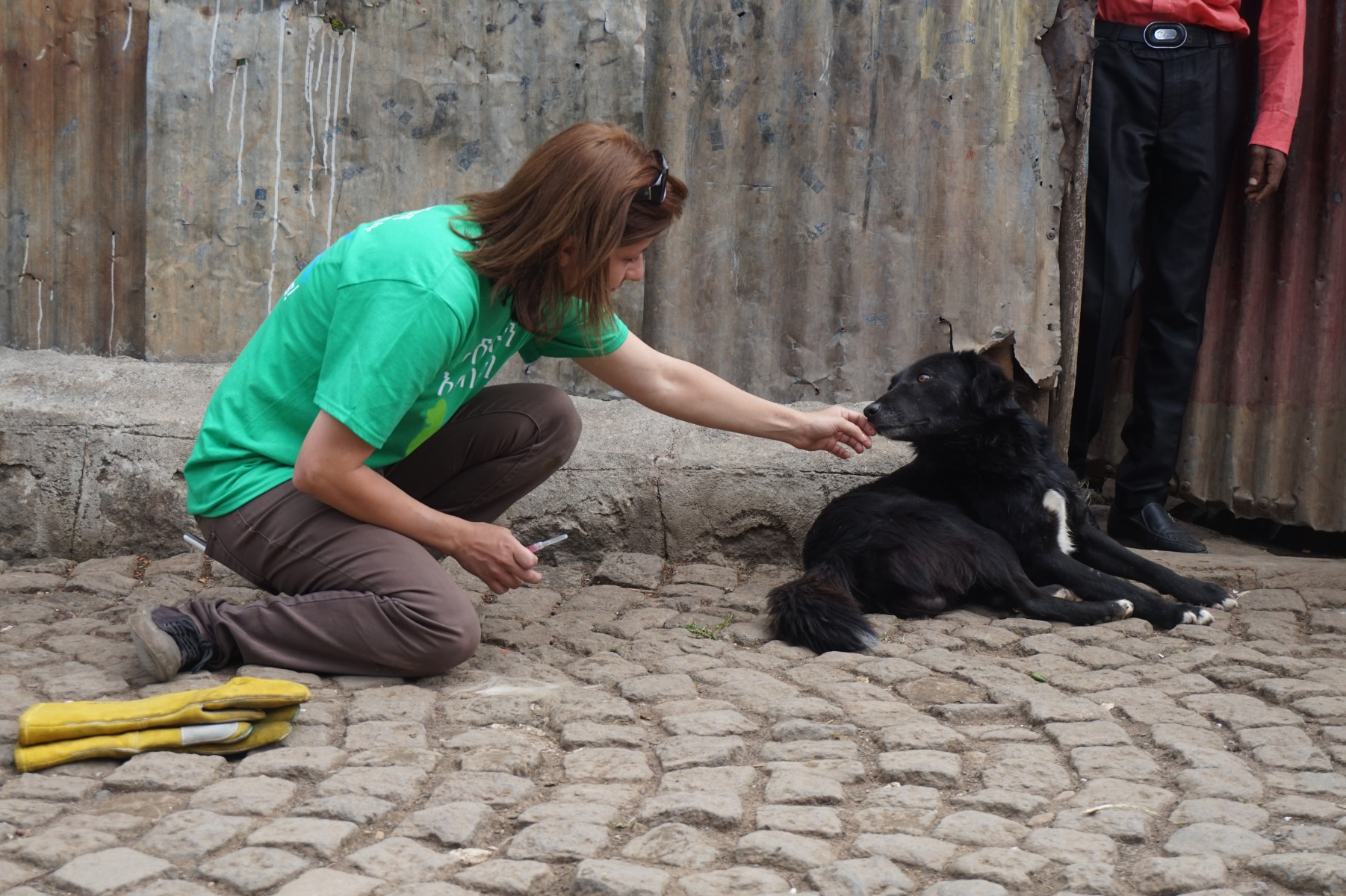Dr. Maria Belu of the College of Veterinary Medicine prepares to give a dog a rabies vaccine in Addis Ababa, Ethiopia. Rabies prevention is a One Health priority.