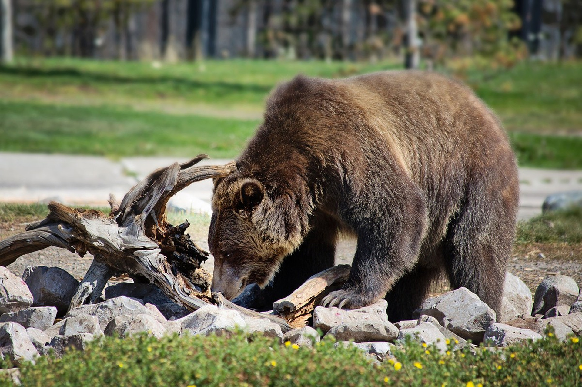 "The same ""brown"" fat that keeps grizzlies warm during their long winter naps could be a key player in the connection between exercise and metabolism"