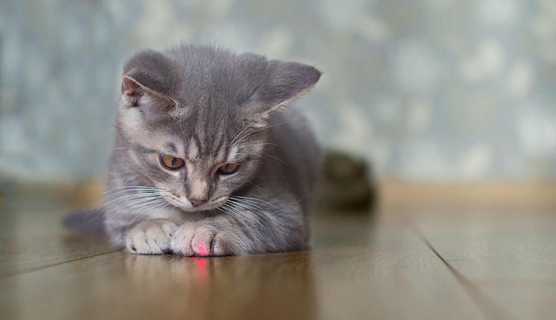 Staring at the beam from a small laser pointer used to exercise pets can cause permanent eye damage, according to the study.
