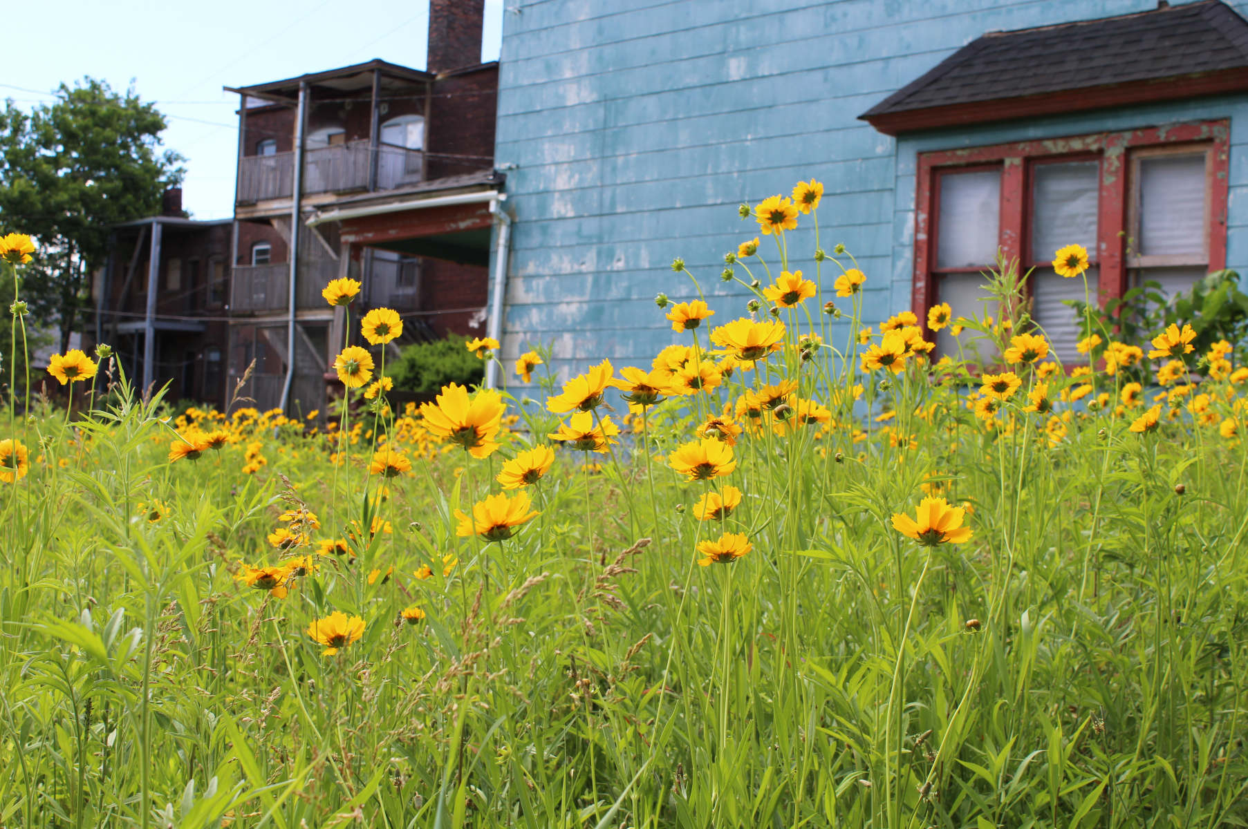 A seven-year project that studied conservation practices in vacant lots in Cleveland, Ohio, also provides insights into how to help residents feel ownership of those conservation practices.