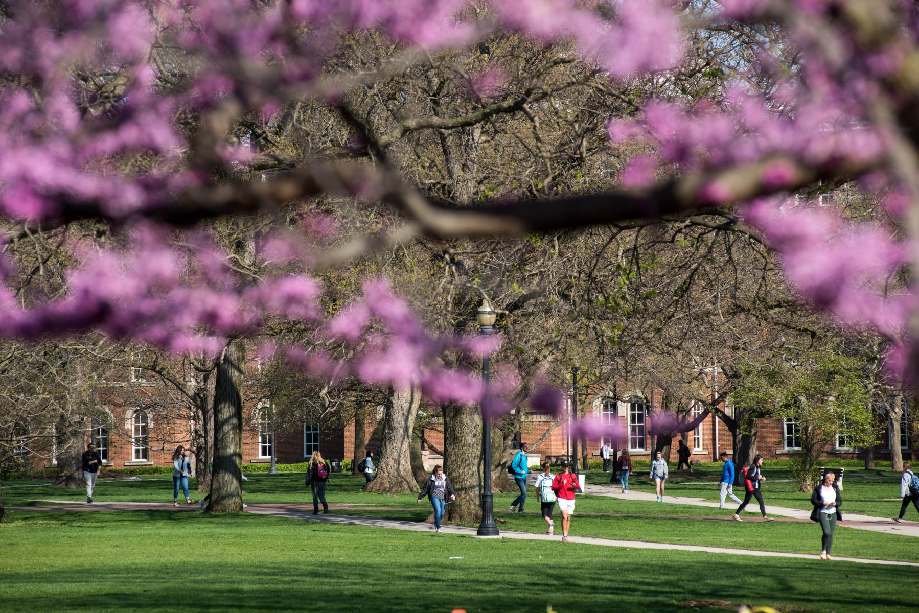 The Oval in spring
