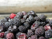 blackraspberries.jpg