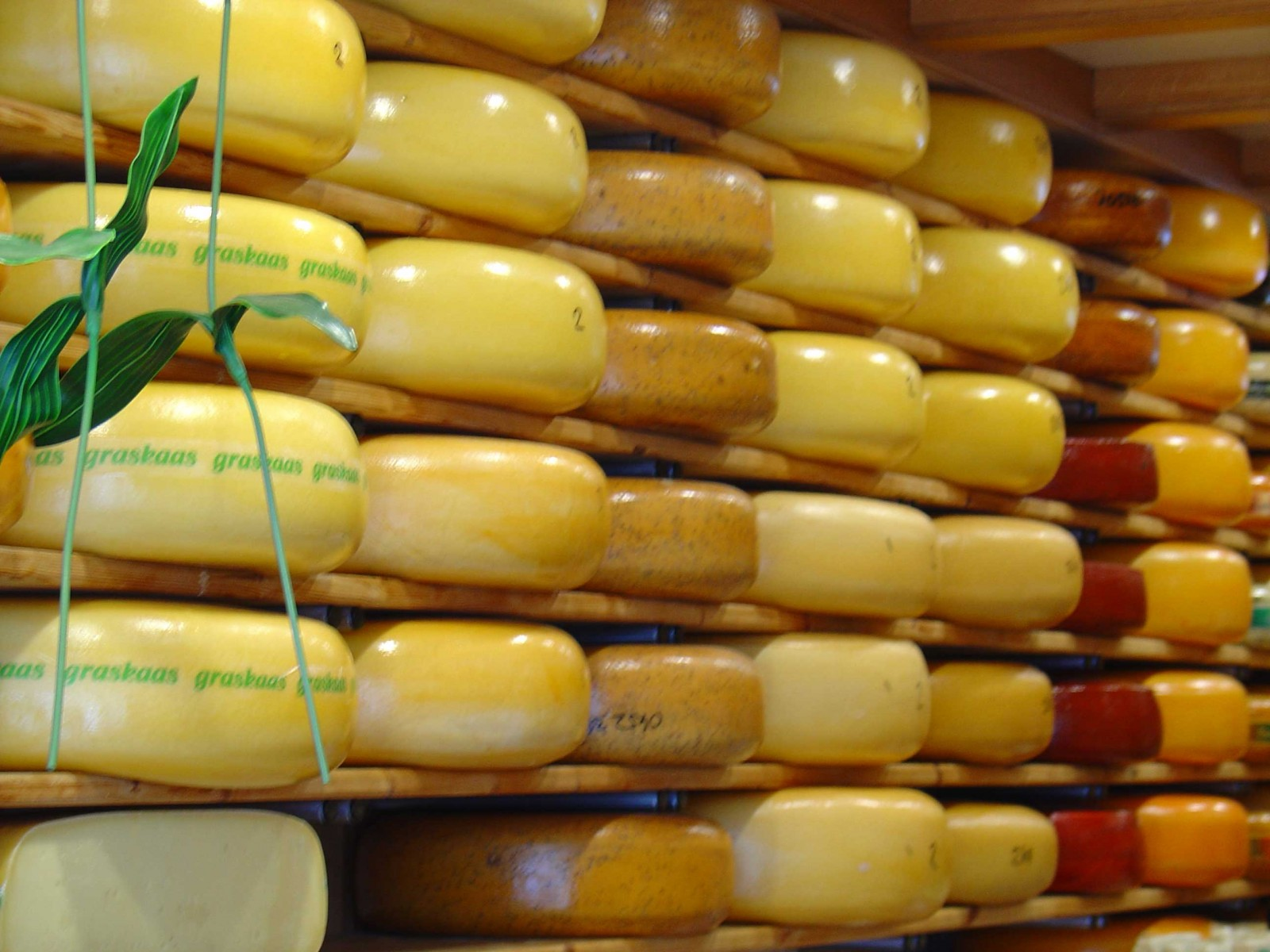 Gouda Cheese, Netherlands